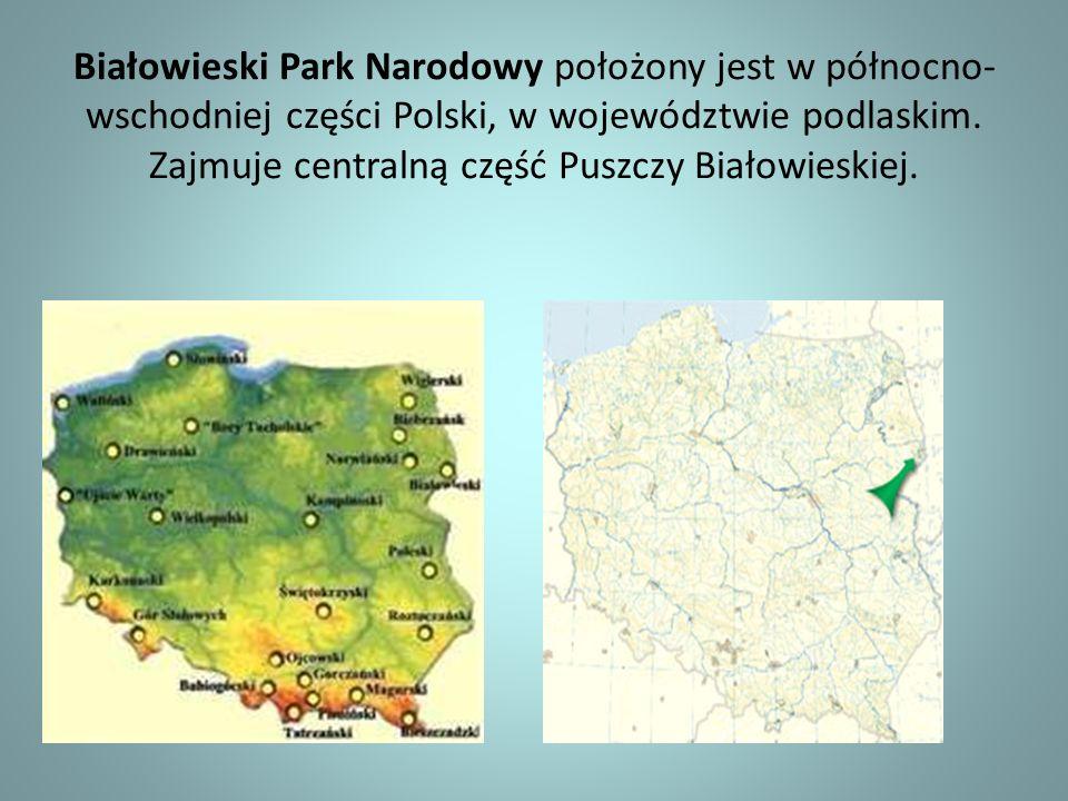 Białowieski Park Narodowy położony jest w północno-wschodniej części Polski, w województwie podlaskim.