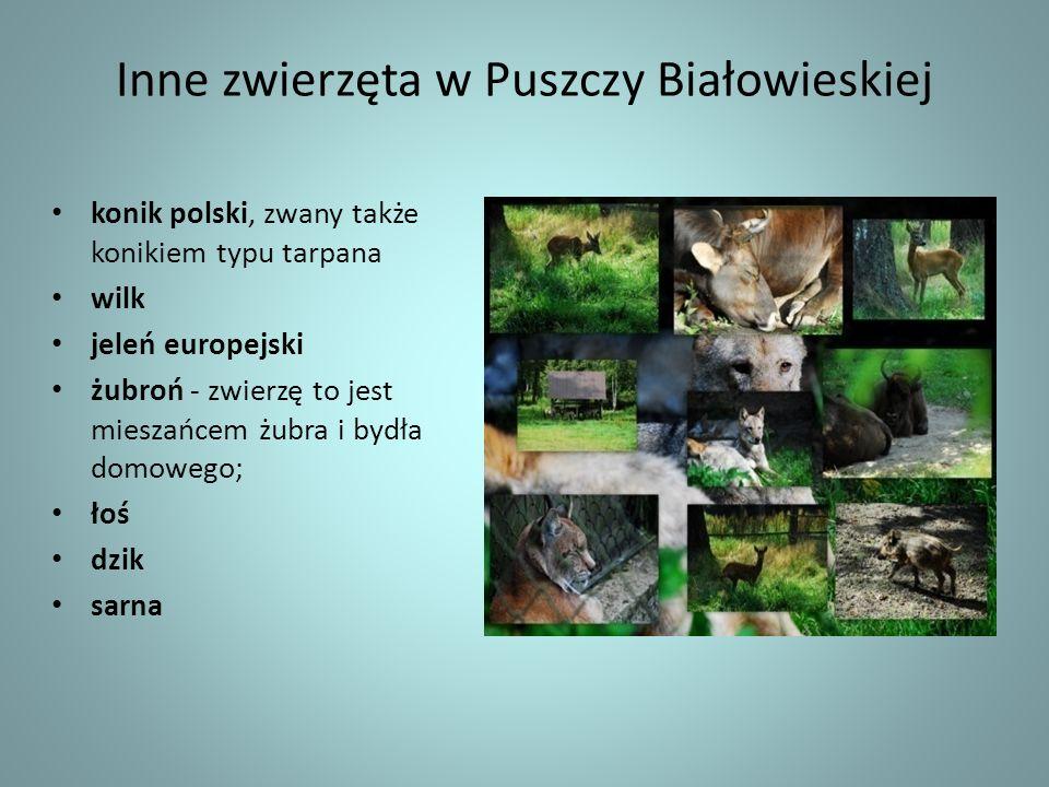 Inne zwierzęta w Puszczy Białowieskiej