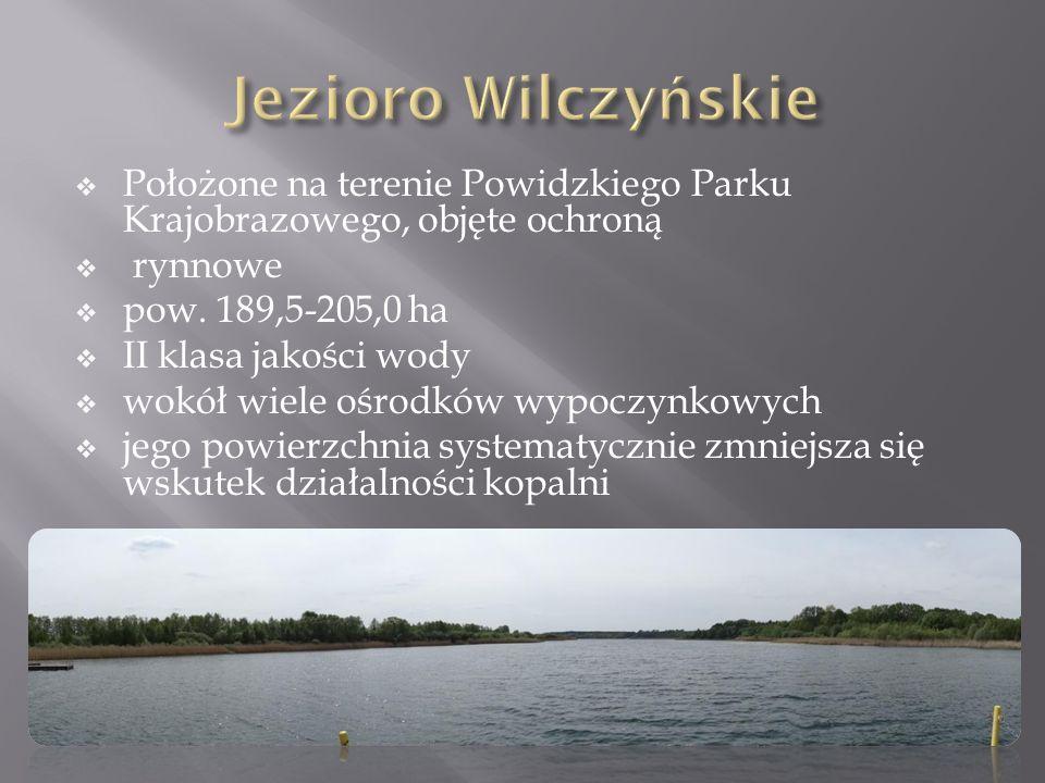 Jezioro Wilczyńskie Położone na terenie Powidzkiego Parku Krajobrazowego, objęte ochroną. rynnowe.