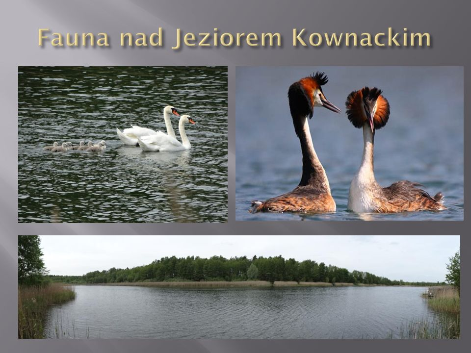 Fauna nad Jeziorem Kownackim