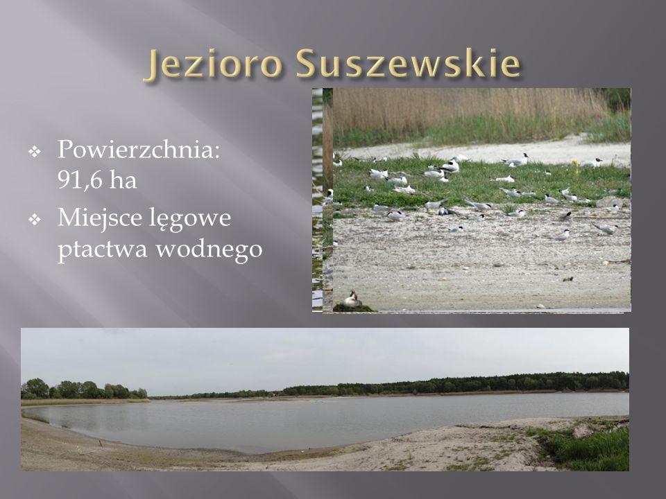 Jezioro Suszewskie Powierzchnia: 91,6 ha