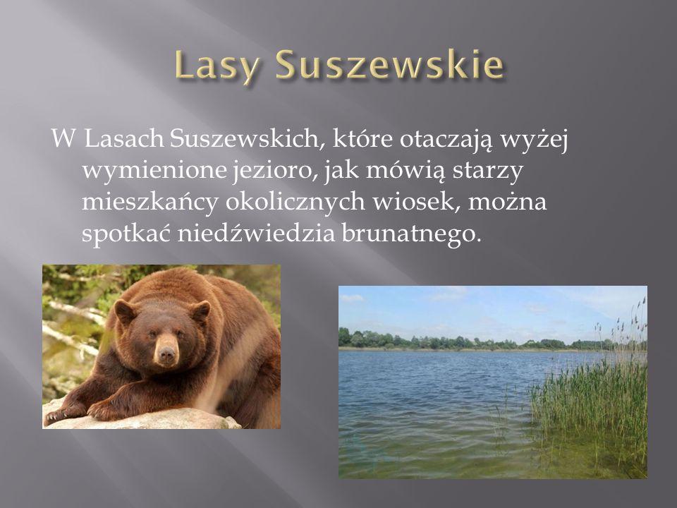Lasy Suszewskie