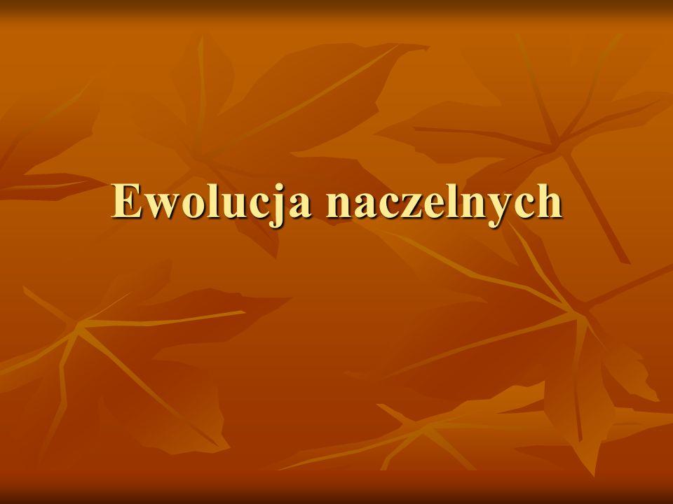 Ewolucja naczelnych