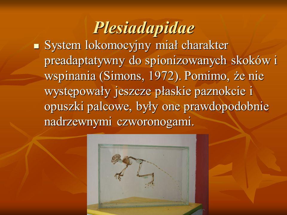 Plesiadapidae