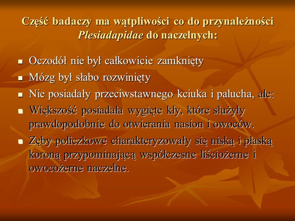 Część badaczy ma wątpliwości co do przynależności Plesiadapidae do naczelnych: