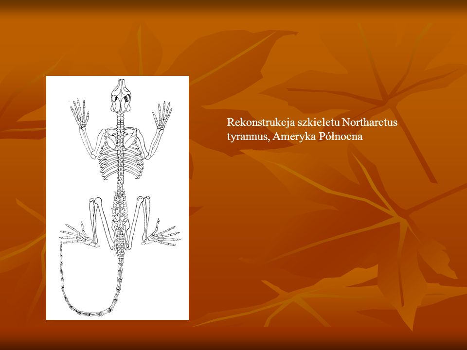 Rekonstrukcja szkieletu Northarctus tyrannus, Ameryka Północna
