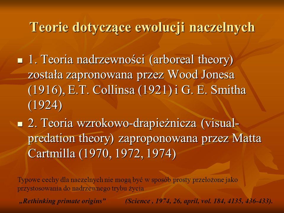 Teorie dotyczące ewolucji naczelnych