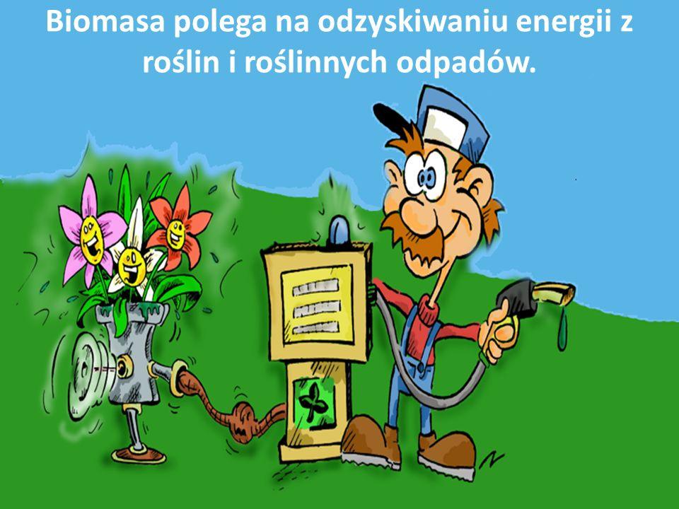 Biomasa polega na odzyskiwaniu energii z roślin i roślinnych odpadów.
