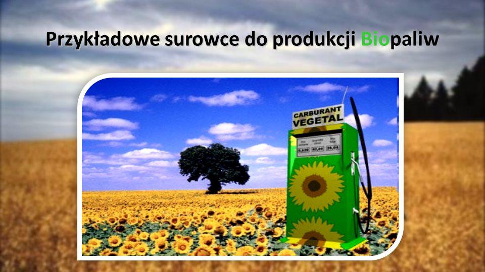 Przykładowe surowce do produkcji Biopaliw