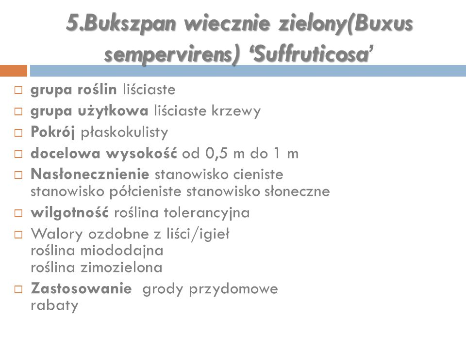 5.Bukszpan wiecznie zielony(Buxus sempervirens) 'Suffruticosa'