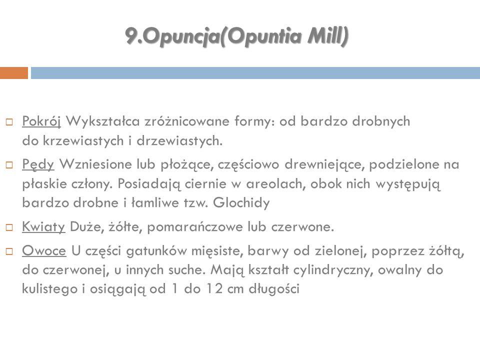 9.Opuncja(Opuntia Mill)