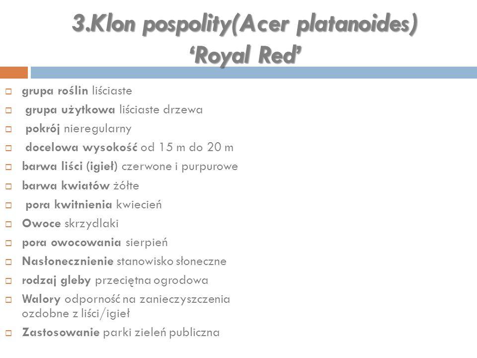 3.Klon pospolity(Acer platanoides) 'Royal Red'