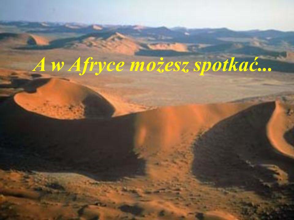A w Afryce możesz spotkać...
