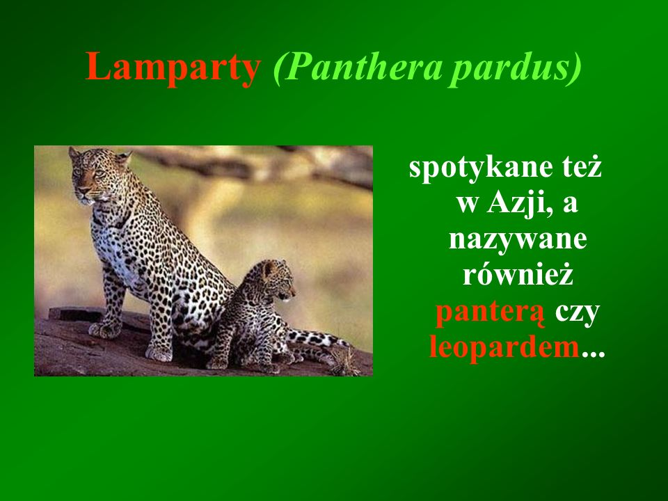 Lamparty (Panthera pardus)