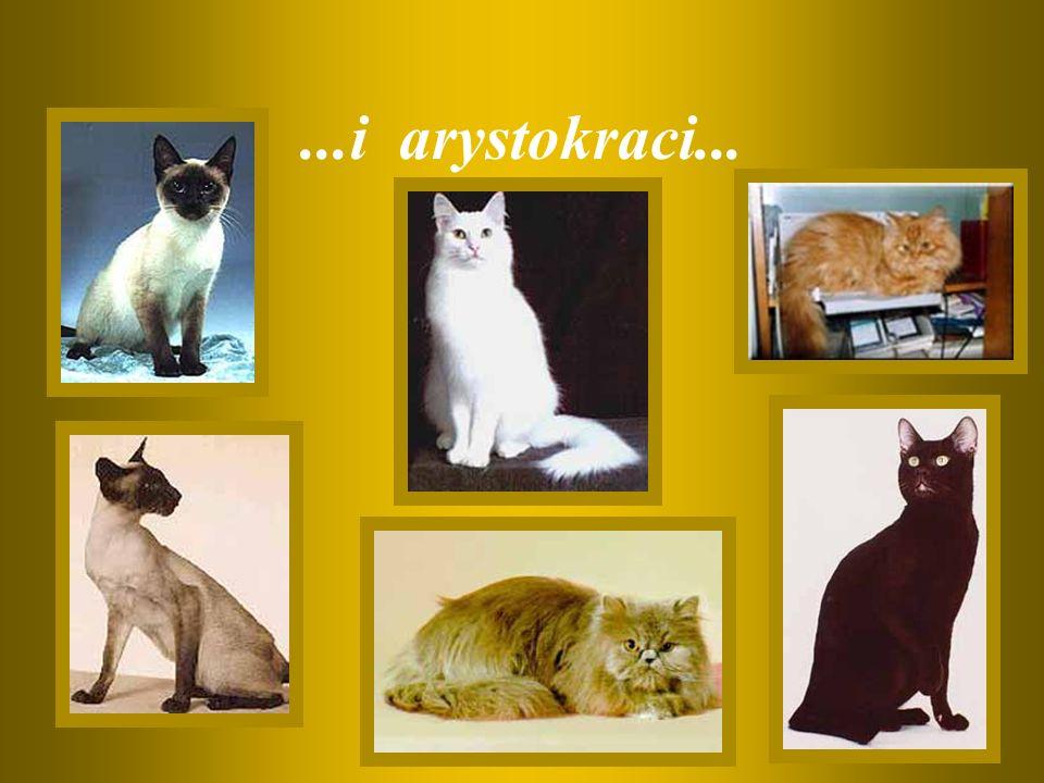 ...i arystokraci...