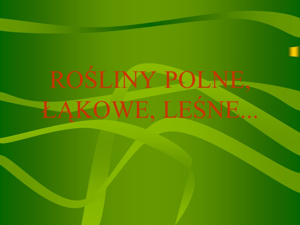 ROŚLINY POLNE, ŁĄKOWE, LEŚNE...