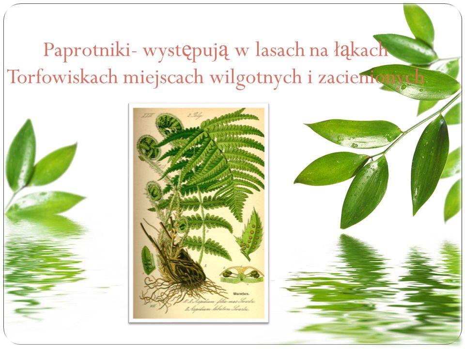 Paprotniki- występują w lasach na łąkach