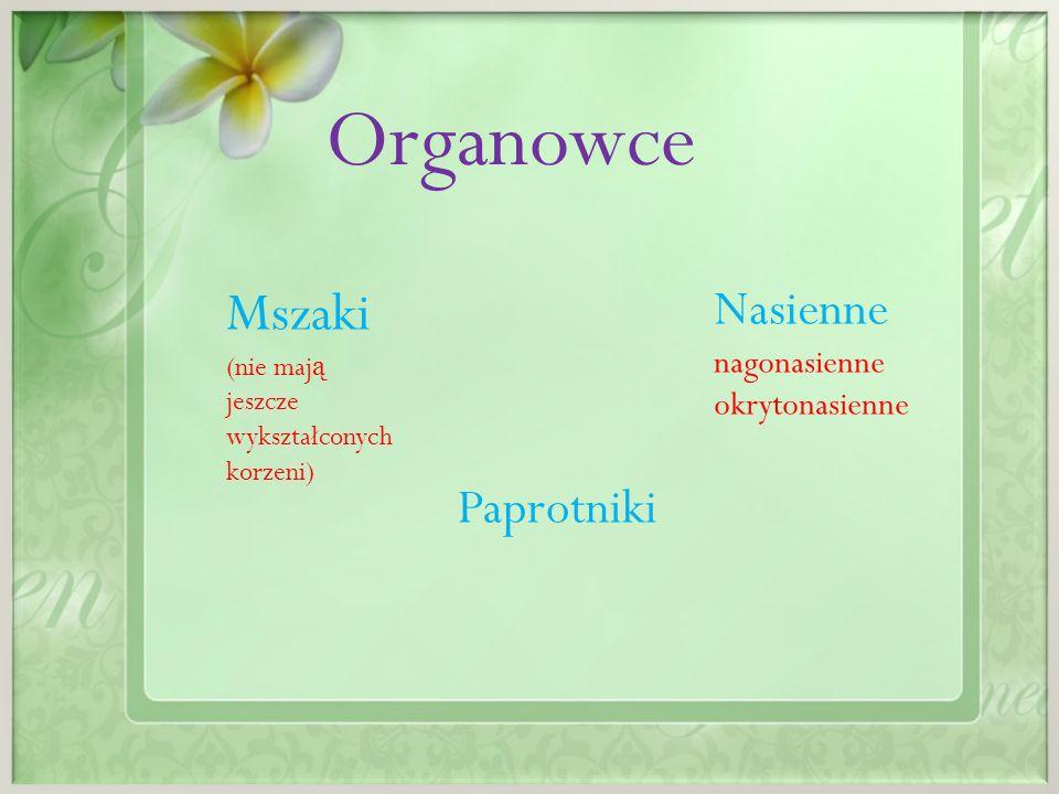 Organowce Mszaki Nasienne Paprotniki nagonasienne okrytonasienne