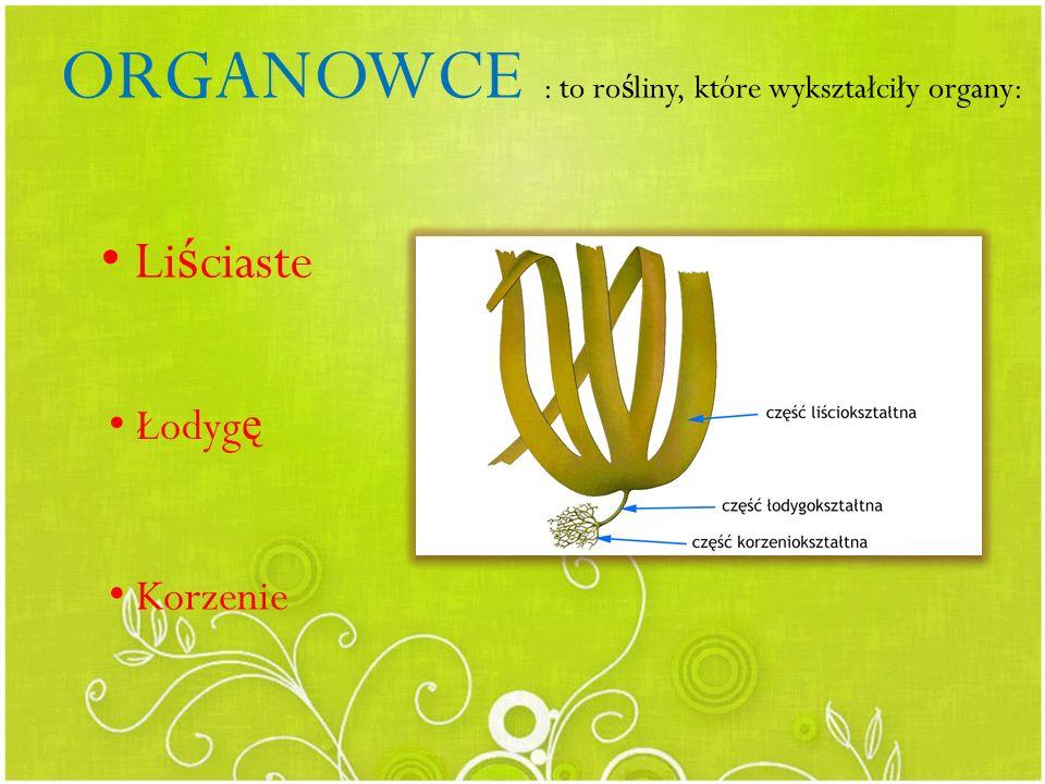 ORGANOWCE : to rośliny, które wykształciły organy: