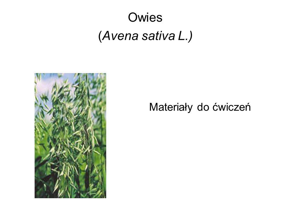 Owies (Avena sativa L.) Materiały do ćwiczeń