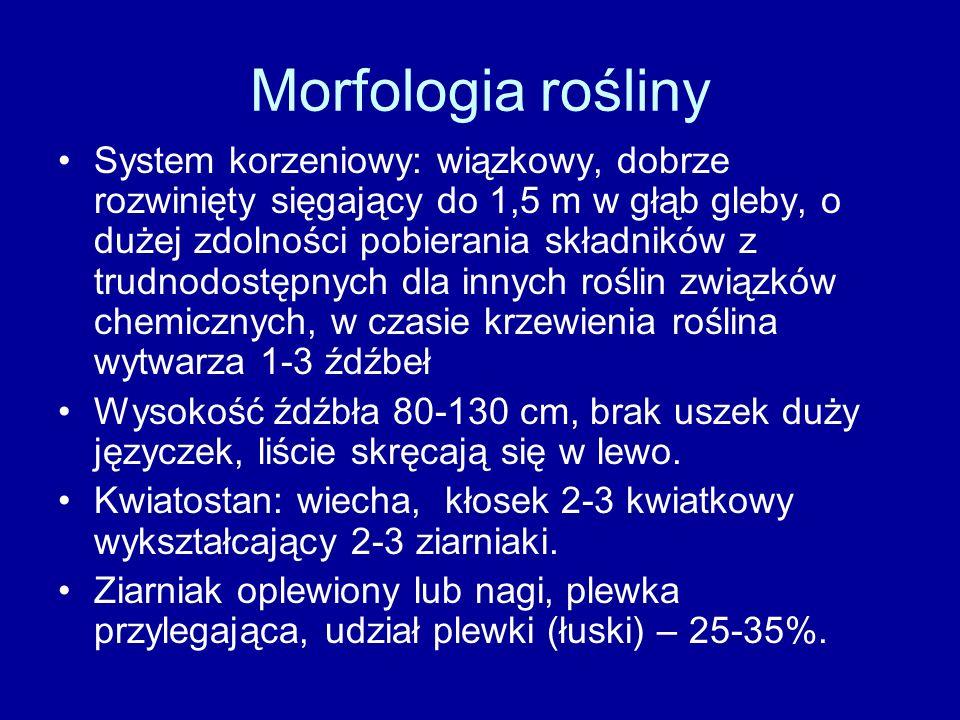 Morfologia rośliny