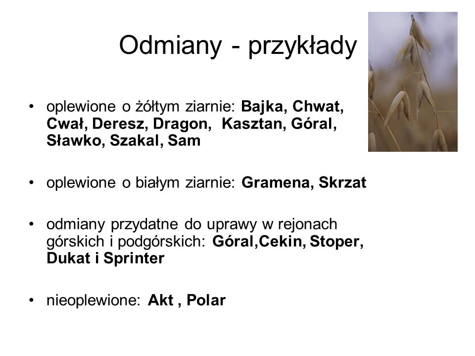 Odmiany - przykłady oplewione o żółtym ziarnie: Bajka, Chwat, Cwał, Deresz, Dragon, Kasztan, Góral, Sławko, Szakal, Sam.