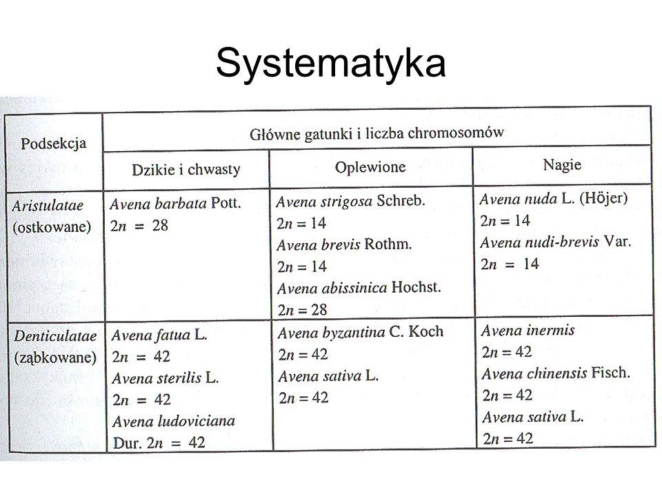 Systematyka