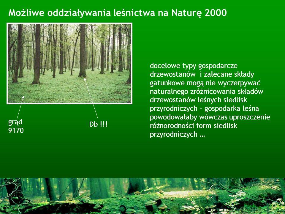Możliwe oddziaływania leśnictwa na Naturę 2000