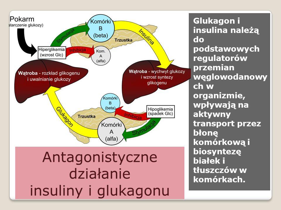 Antagonistyczne działanie insuliny i glukagonu