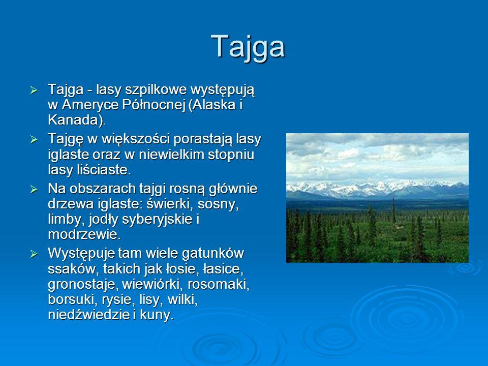 Tajga Tajga - lasy szpilkowe występują w Ameryce Północnej (Alaska i Kanada).