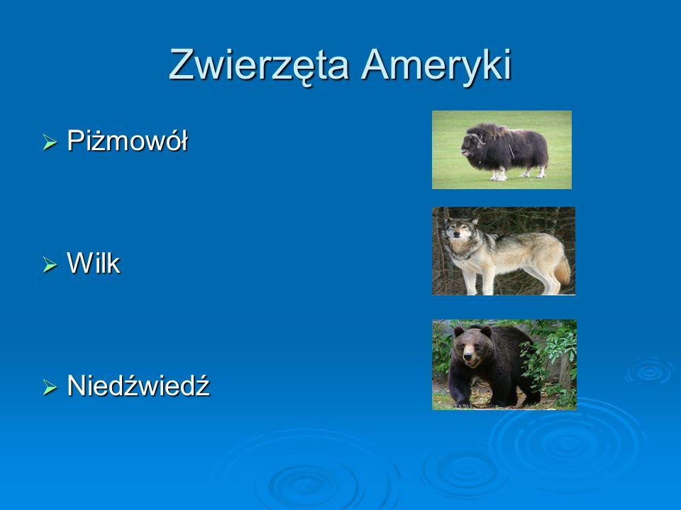 Zwierzęta Ameryki Piżmowół Wilk Niedźwiedź
