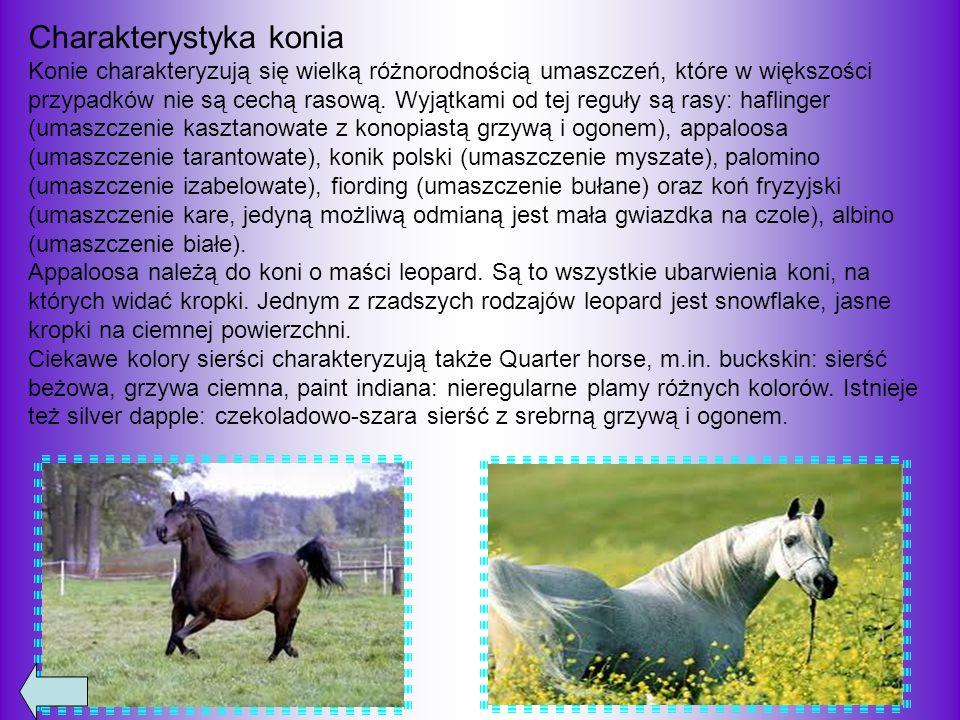 Charakterystyka konia