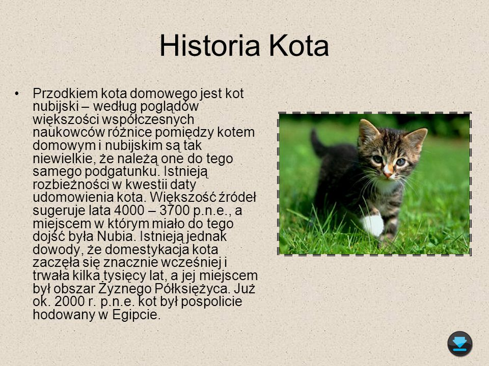 Historia Kota