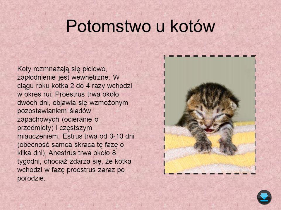 Potomstwo u kotów