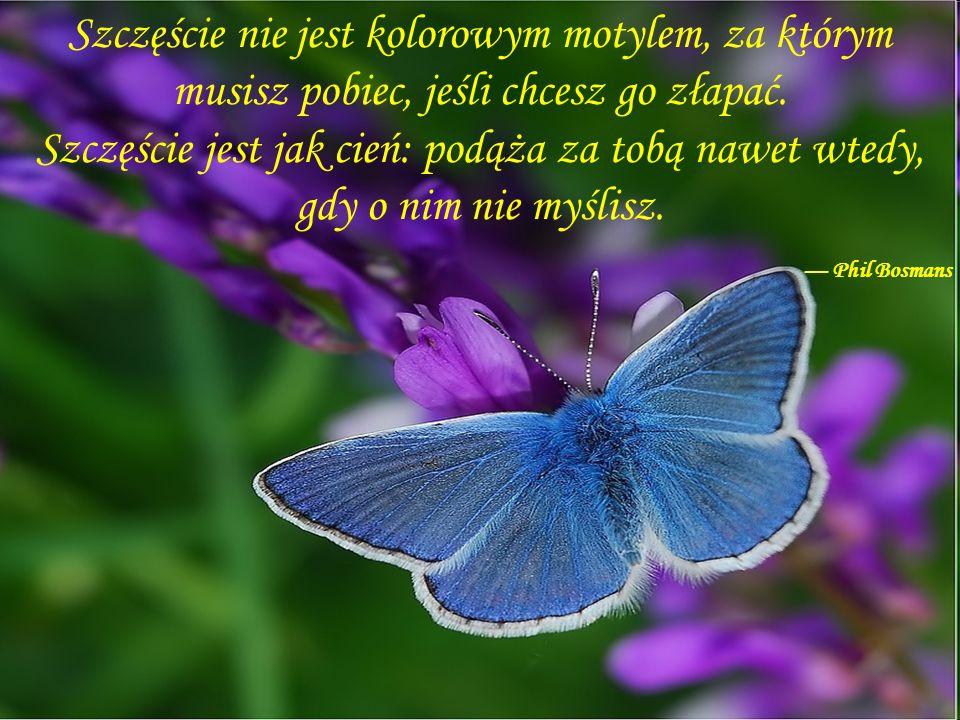 Szczęście nie jest kolorowym motylem, za którym musisz pobiec, jeśli chcesz go złapać.
