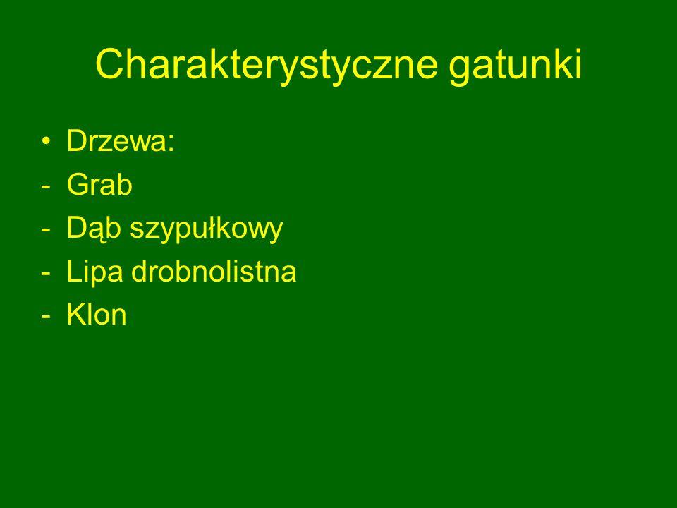 Charakterystyczne gatunki