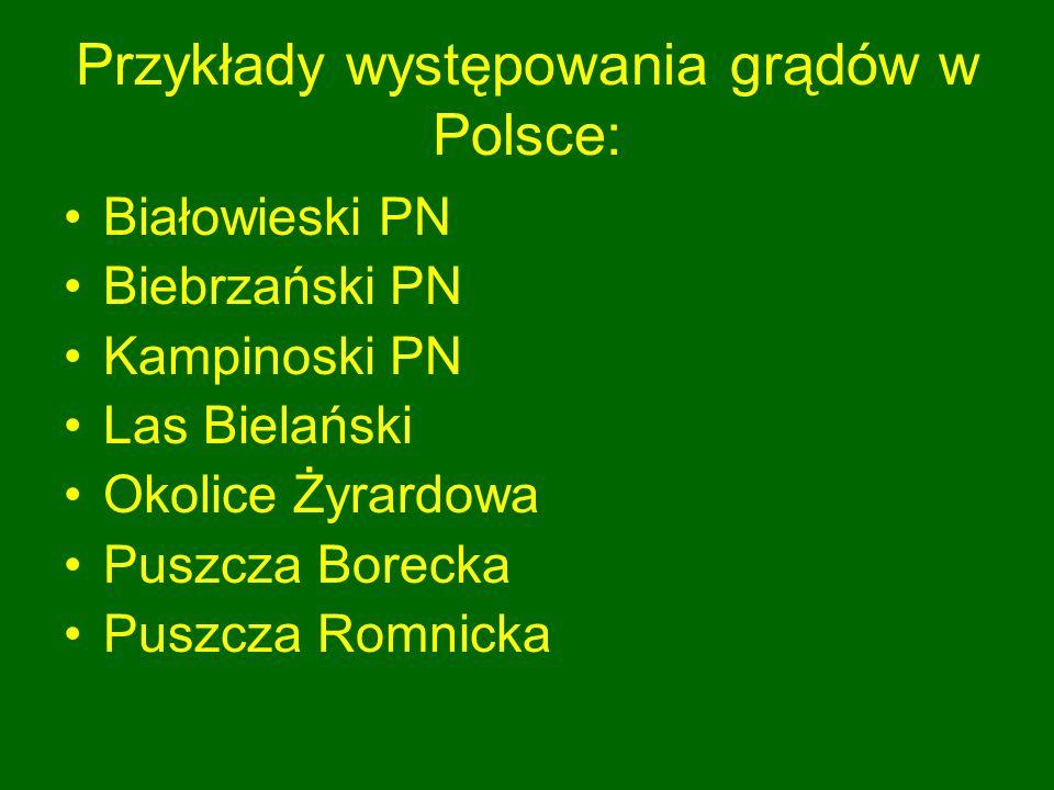 Przykłady występowania grądów w Polsce: