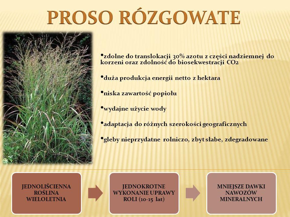 PROSO RÓZGOWATEzdolne do translokacji 30% azotu z części nadziemnej do korzeni oraz zdolność do biosekwestracji CO2.