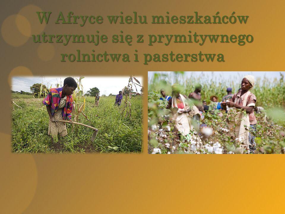 W Afryce wielu mieszkańców utrzymuje się z prymitywnego rolnictwa i pasterstwa