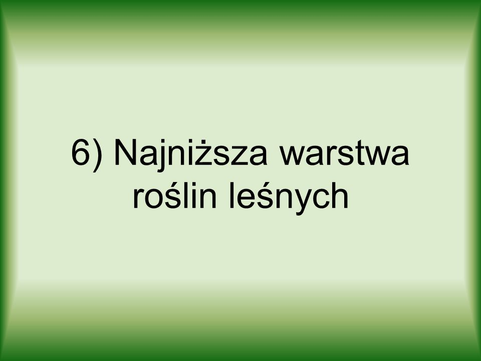 6) Najniższa warstwa roślin leśnych