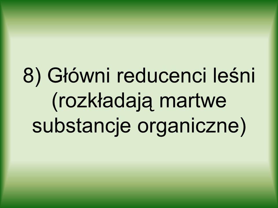 8) Główni reducenci leśni (rozkładają martwe substancje organiczne)