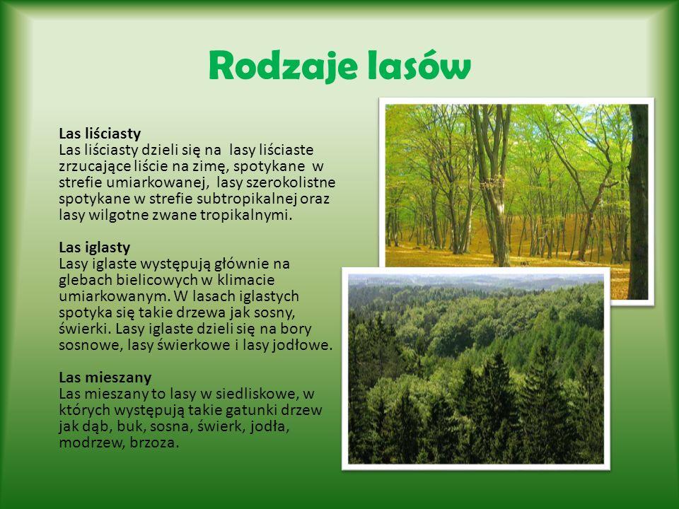 Rodzaje lasów