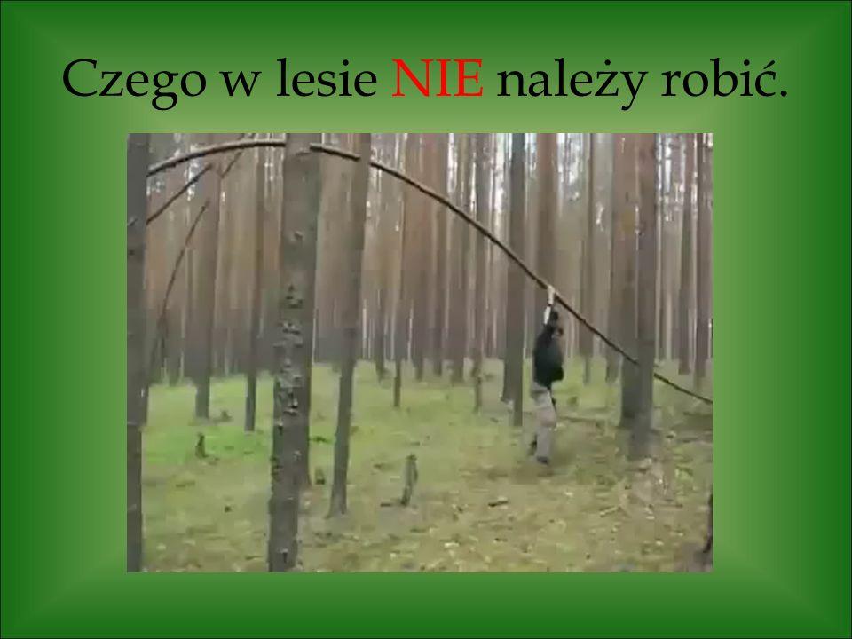 Czego w lesie NIE należy robić.