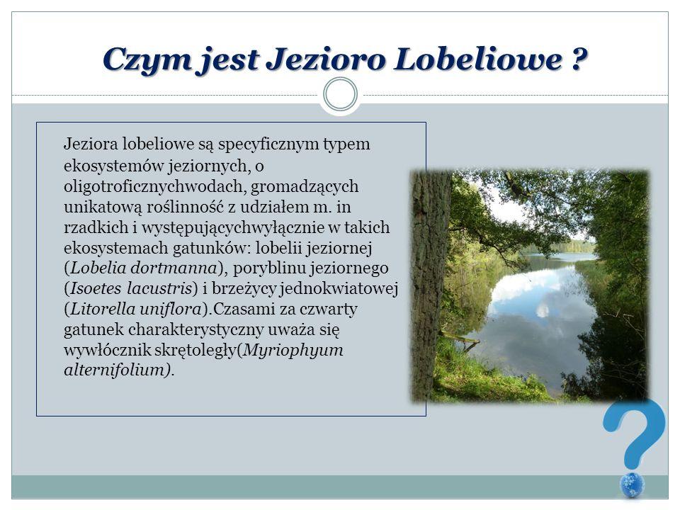 Czym jest Jezioro Lobeliowe