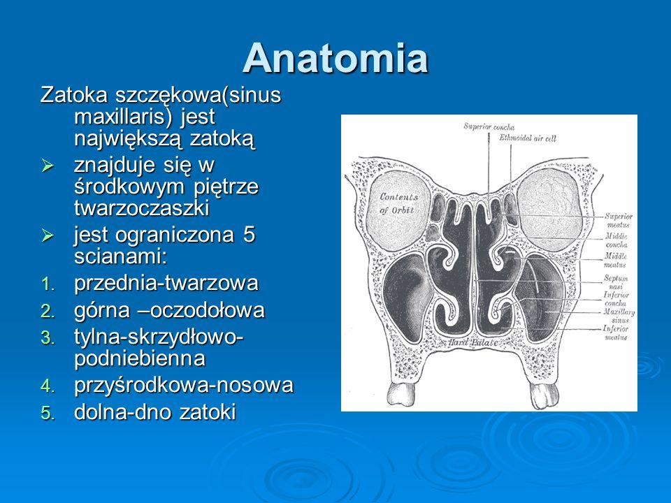 Anatomia Zatoka szczękowa(sinus maxillaris) jest największą zatoką