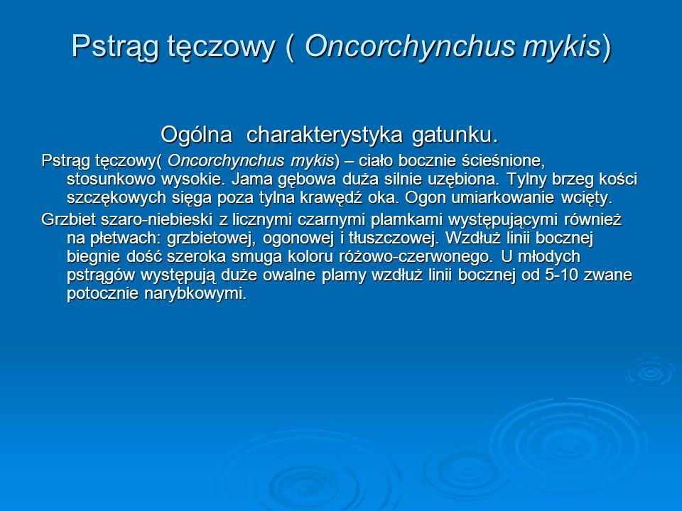 Pstrąg tęczowy ( Oncorchynchus mykis)