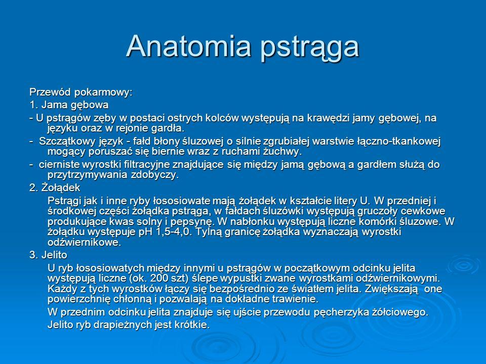 Anatomia pstrąga Przewód pokarmowy: 1. Jama gębowa