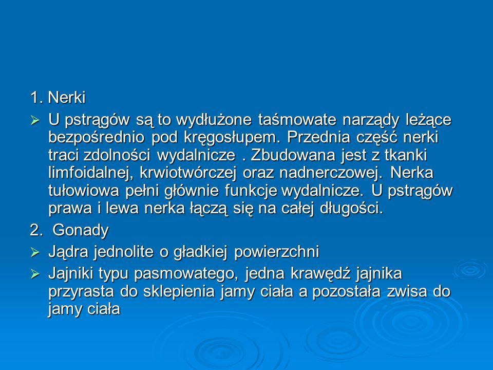 1. Nerki