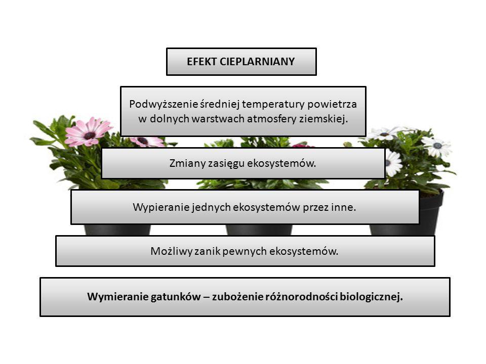 Wymieranie gatunków – zubożenie różnorodności biologicznej.