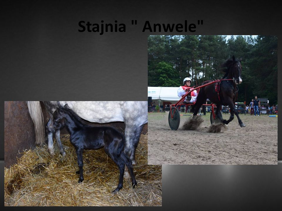 Stajnia Anwele